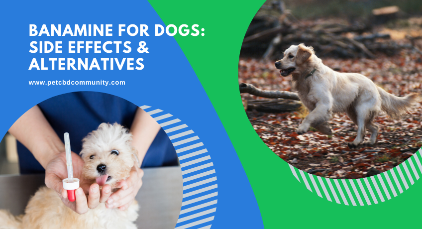 Banamine-for-dogs-side-effects-and-alternatives
