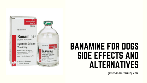 Banamine for dogs side effects and alternatives