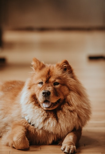 Can CBD oil help dogs with Lymphoma