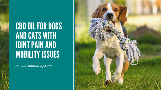 Can CBD Oil Help Dogs With Joint pain and Mobility Issues