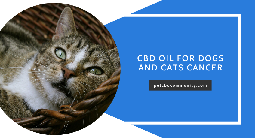 Can-CBD-Oil-help-dogs-with-cancer