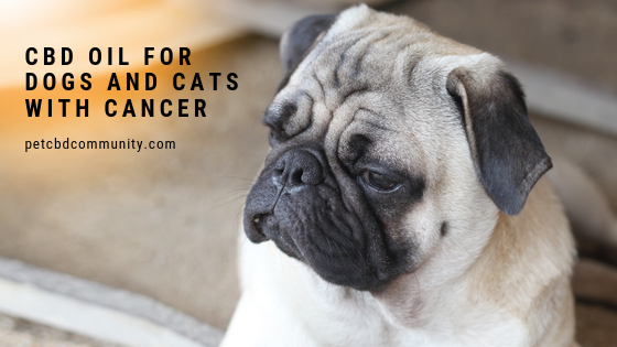 Can CBD Oil help dogs with cancer