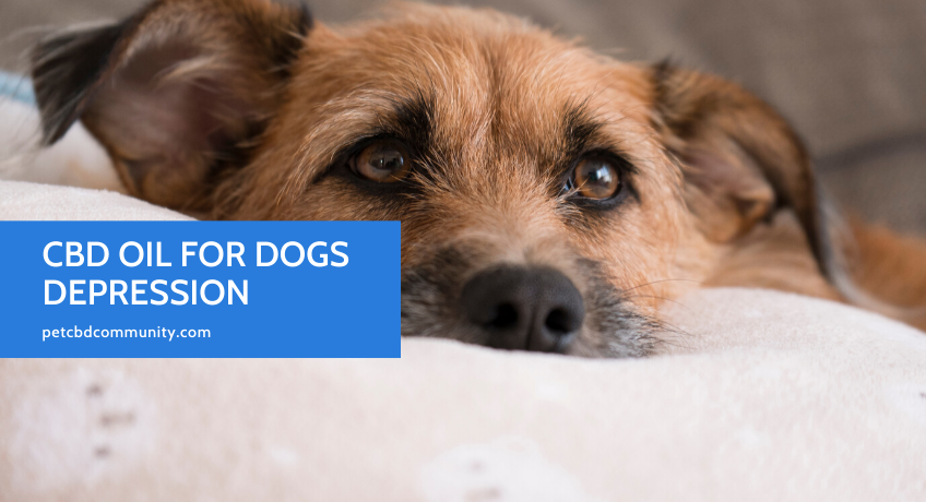 Can-CBD-Oil-help-dogs-with-depression