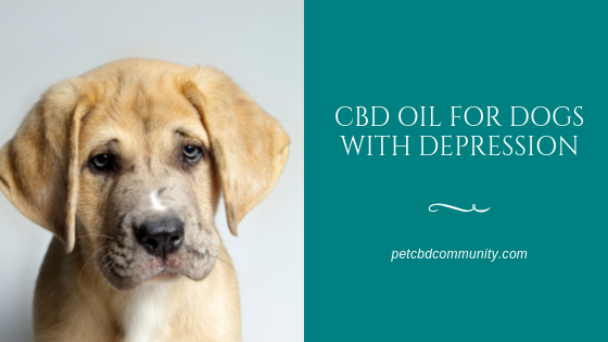 Can CBD Oil help dogs with depression
