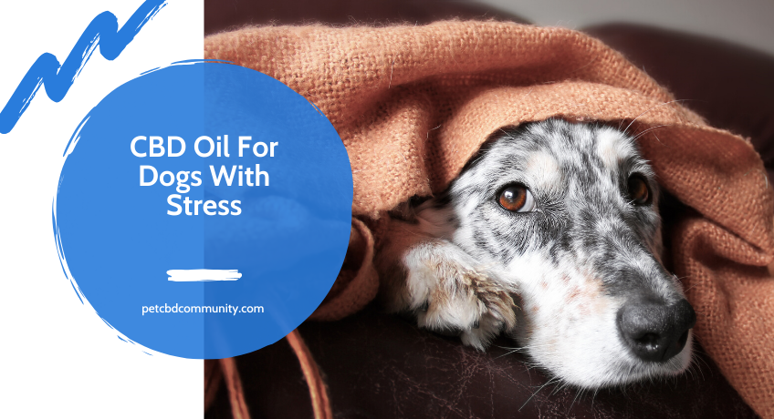 Can-CBD-Oil-help-dogs-with-stress