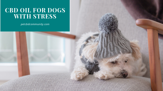 Can CBD Oil help dogs with stress