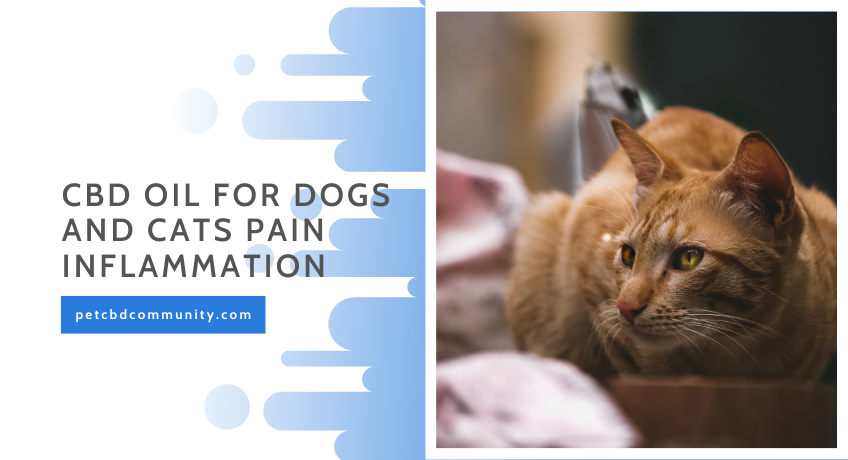Can-cbd-oil-for-dogs-help-with-pain-inflammation
