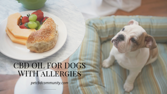Can cbd oil for dogs help with skin allergies