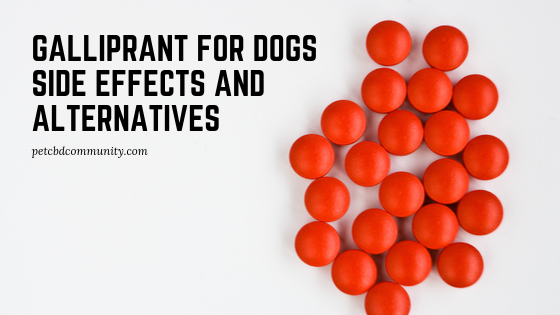 Galliprant For dogs side effects and alternatives