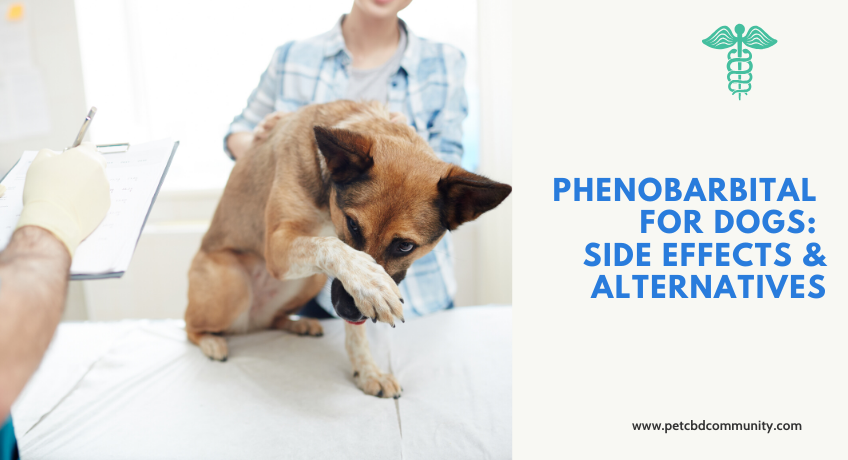 Phenobarbital-for-dogs-side-effects-and-alternatives