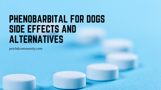 Phenobarbital for dogs side effects and alternatives