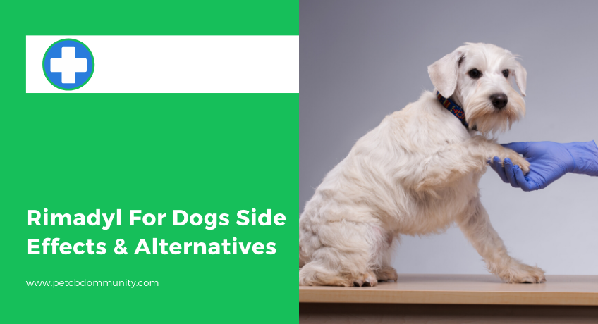 Rimadyl-for-dogs-side-effects-alternatives