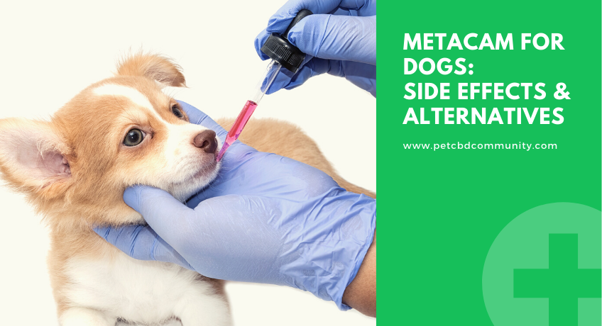 Side-effects-of-metacam-for-dogs