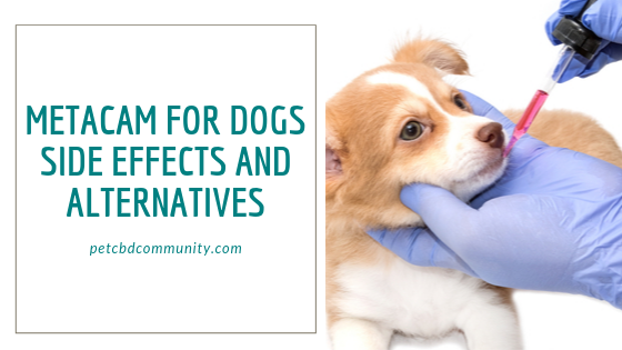 Side effects of metacam for dogs