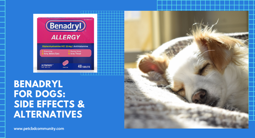 benadryl-for-dogs-side-effects-and-alternatives