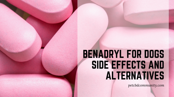 benadryl for dogs side effects and alternatives