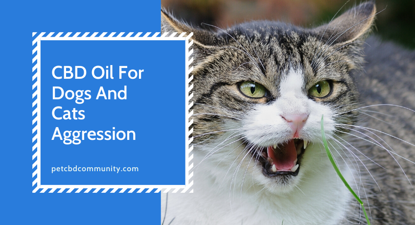 can-cbd-oil-help-dogs-with-aggression