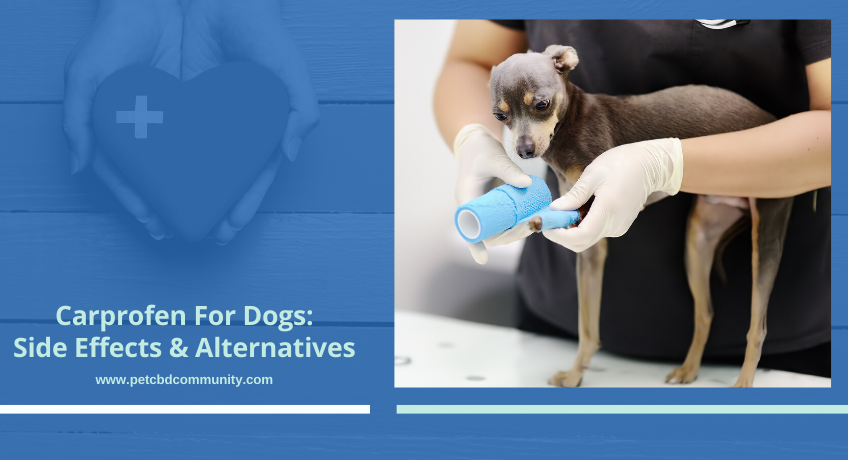 carprofen-for-dogs-side-effects-alternatives