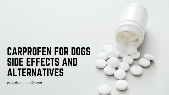 carprofen for dogs side effects alternatives