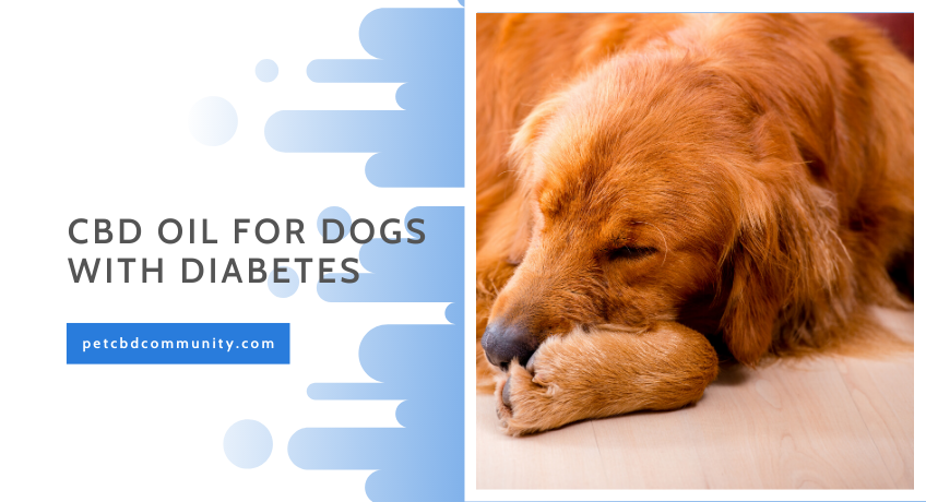 cbd-oil-for-dogs-with-diabetes