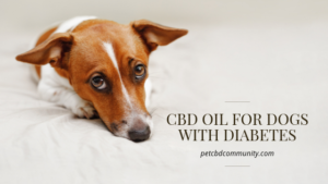 cbd oil for dogs with diabetes