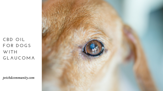 cbd oil for dogs with glaucoma