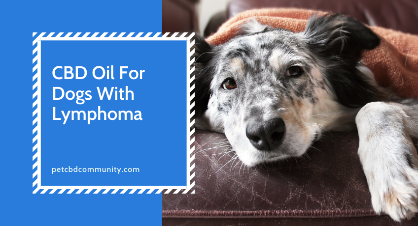cbd-oil-for-dogs-with-lymphoma