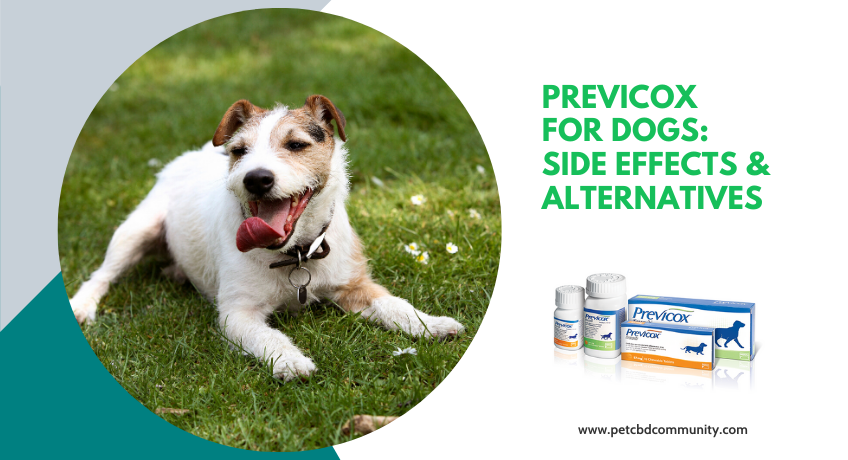previcox-for-dogs-side-effects-and-alternatives
