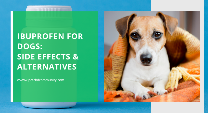 side-effects-of-ibuprofen-for-dogs-and-alternatives