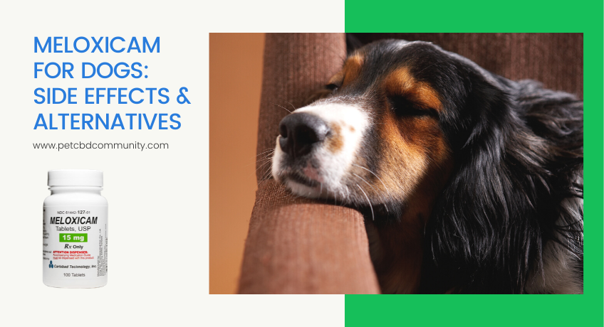 side-effects-of-meloxicam-for-dogs-and-alternatives