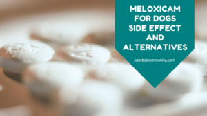 side effects of meloxicam for dogs and alternatives