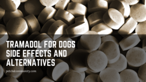 tramadol for dogs side effects alternatives