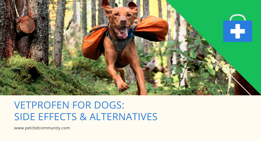 vetprofen-for-dogs-side-effects-and-alternatives