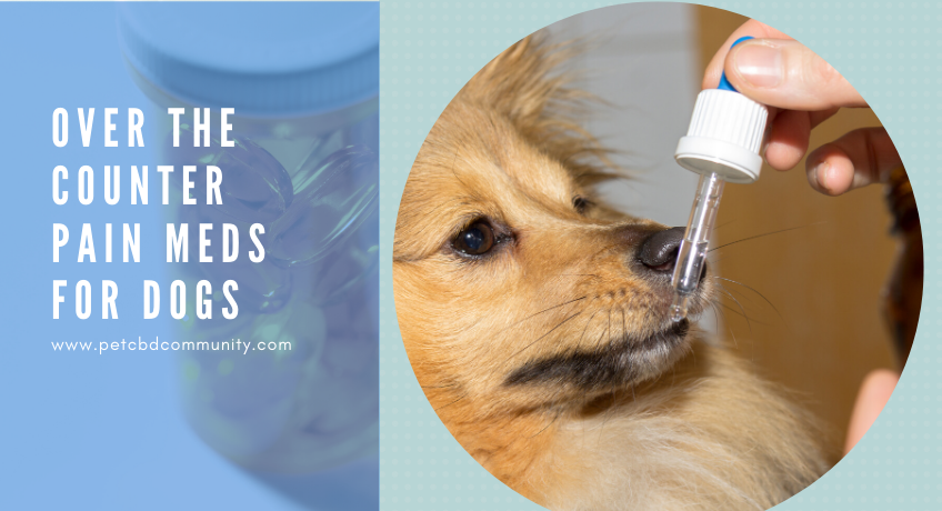 anti inflammatory meds for dogs