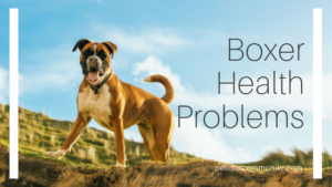 boxer health problems