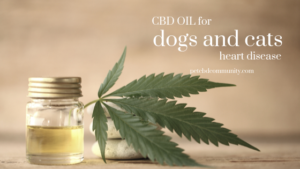 cbd oil for dogs and cats heart disease