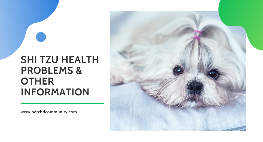 shi-tzu-health-problems