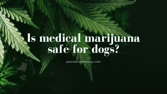 Is medical marijuana safe for dogs