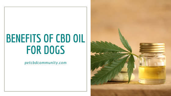 benefits of cbd oil for dogs