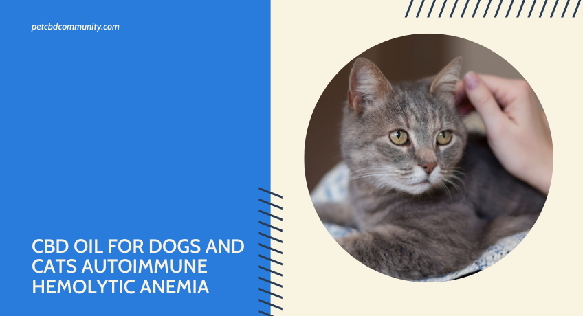 can-CBD-Oil-help-Dogs-and-Cats-with-Autoimmune-Hemolytic-Anemia