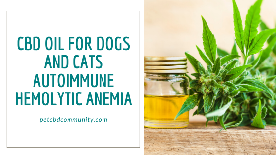 can CBD Oil help Dogs and Cats with Autoimmune Hemolytic Anemia