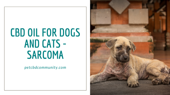 cbd oil for dogs and cats sarcoma