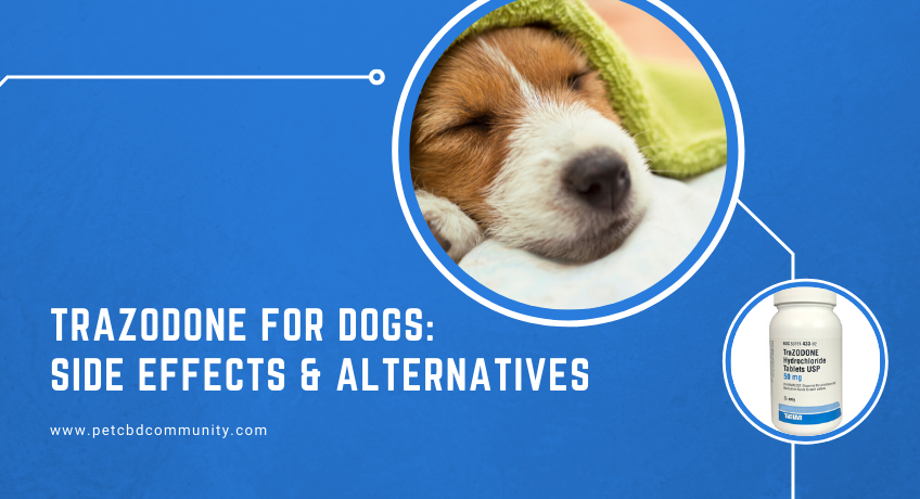 side-effects-of-trazodone-for-dogs-alternatives