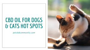 CBD Oil for dogs and cats hot spots