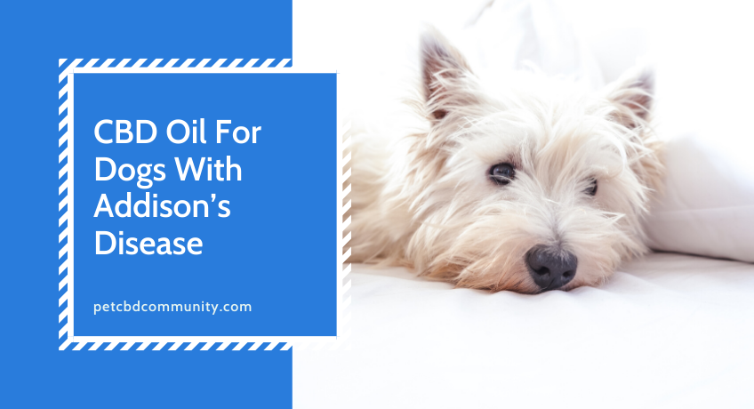 CBD-oil-for-dogs-addisons-disease