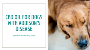 CBD oil for dogs addisons disease