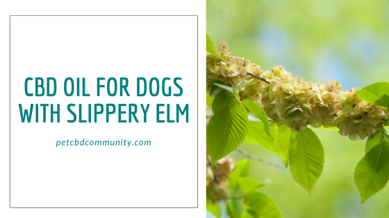 CBD oil for dogs with slipper elm