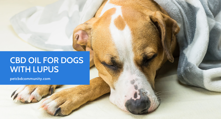 can cbd oil help dogs with lupus