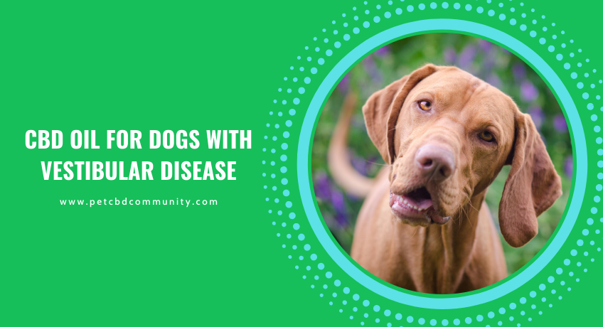 cbd-oil-for-dogs-with-vestibular-disease