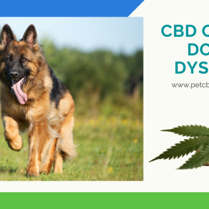 cbd-oil-for-dogs-hip-dysplasia